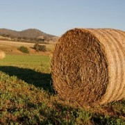 Hereford hay bale